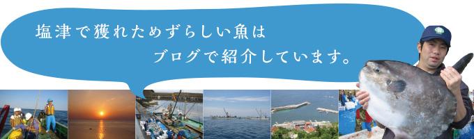 塩津で穫れためずらしい魚はブログで紹介しています。