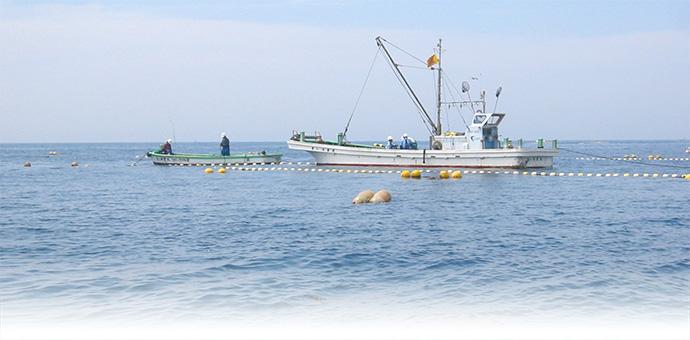 定置網漁の様子